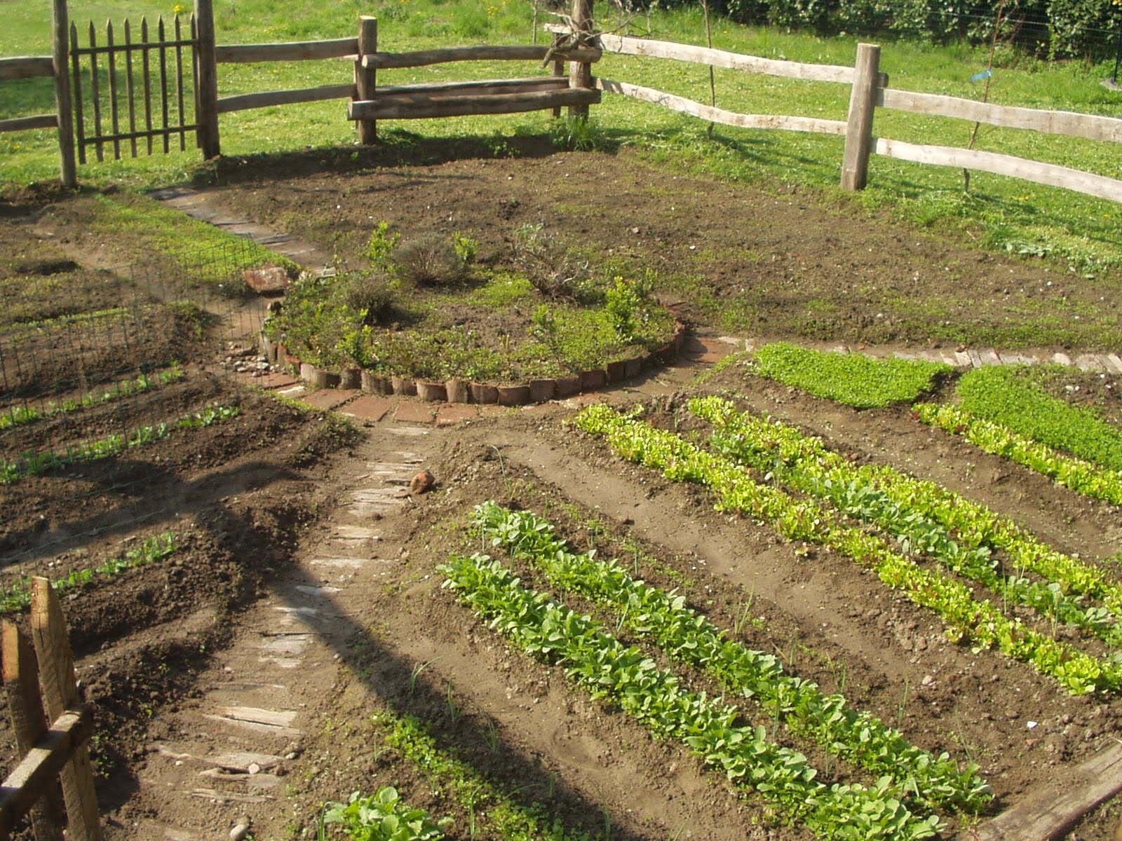 L 39 orto di febbraio - L orto in giardino ...