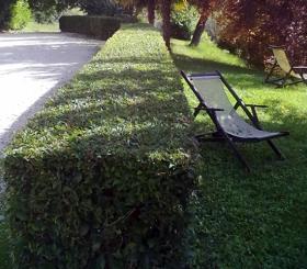 Taglio siepi, manutenzione giardini